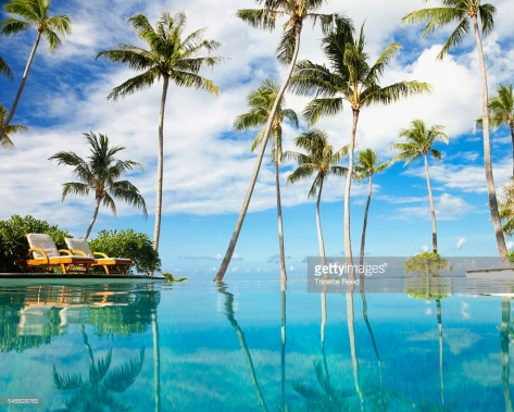 Palm trees reflecting in infinity pool in tropical resort